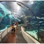 l-aquarium-de-barcelona