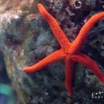 l-aquarium-de-barcelona-rozgwiazda