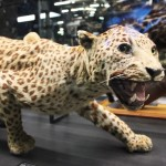 museu-de-zoologia-wystawa