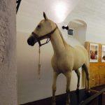 Wypchany koń